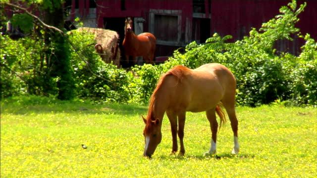 cavallo allevamento - stallone video stock e b–roll