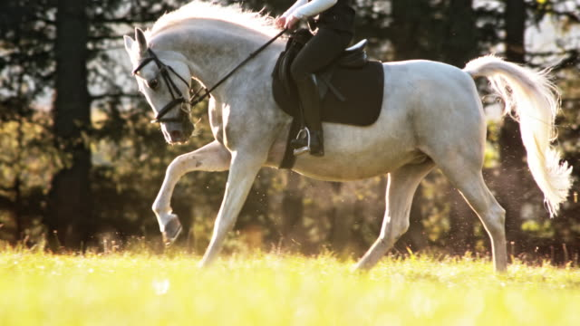 stockvideo's en b-roll-footage met slo mo ts paard galopperende met ruiter over weide - alleen één mid volwassen man