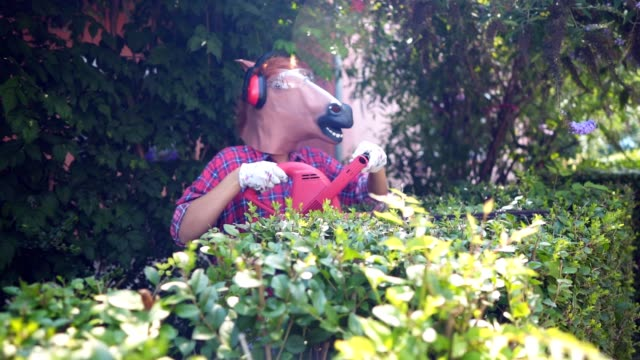 Horse gardening Woman wearing horse head mask is pruning green hedge with electric trimmer in the backyard. mask disguise stock videos & royalty-free footage
