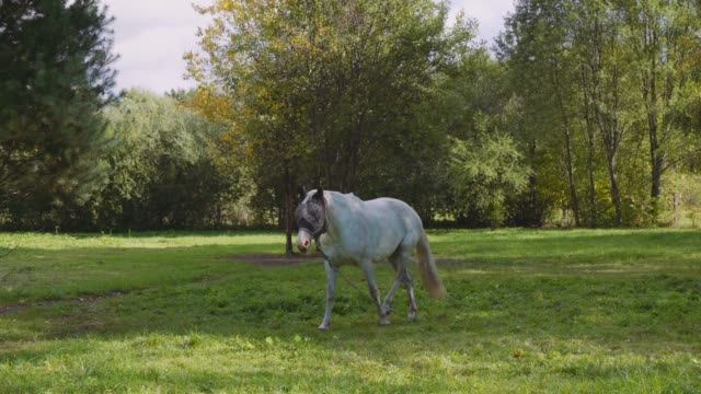Horse grazing in the meadow video