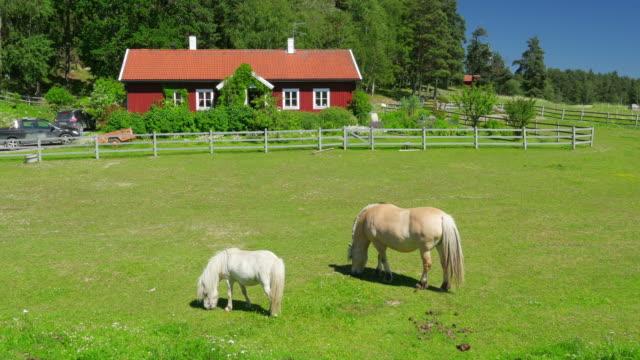 vídeos de stock e filmes b-roll de cavalos de pasto na relva, escandinavo espaço rural aldeia perto de estocolmo - celeiro
