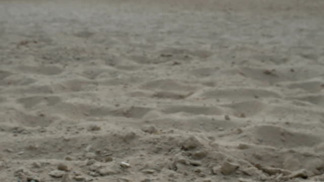 Horse hooves leaves a trail on the sand video