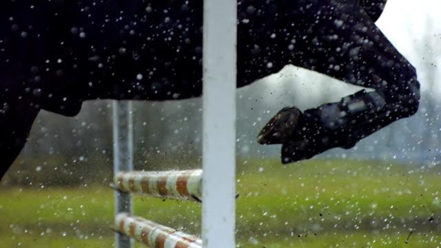 hästhovar flyttar över hinder. - hästhoppning bildbanksvideor och videomaterial från bakom kulisserna