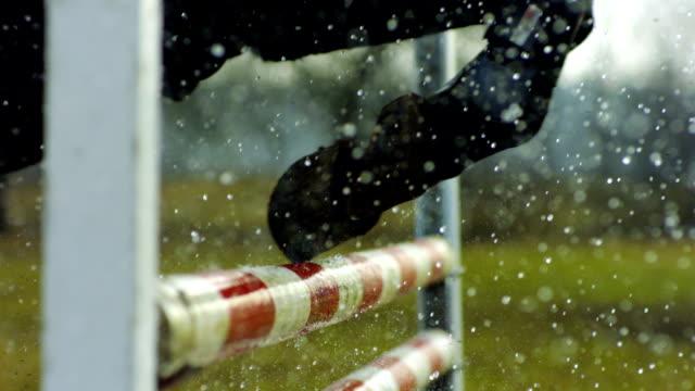 vídeos y material grabado en eventos de stock de caballo pezuñas de en movimiento en obstáculo. - caballo