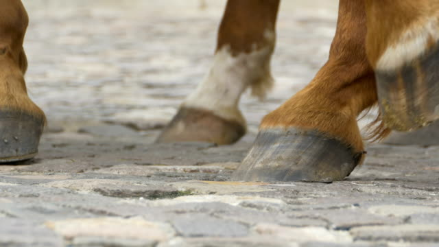 horse hooves on cobblestone - cocchio video stock e b–roll