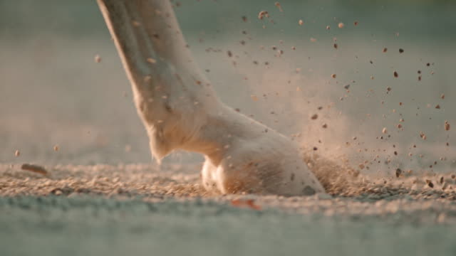 SLO MO Horse hooves walking on sandy ground video
