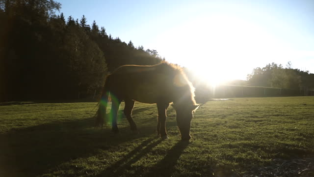horse. horse walking in the field - criniera video stock e b–roll