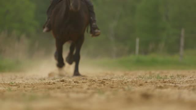 cavallo cavaliere galloping, passa la telecamera in piena velocità con audio - cavalla video stock e b–roll