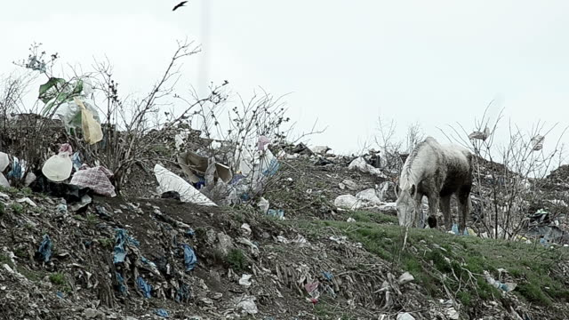 horse in a landfill video