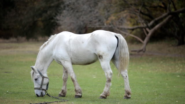 horse in a meadow - grzywa filmów i materiałów b-roll