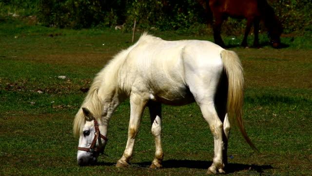 Horse in grass field