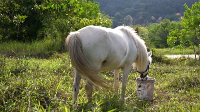 cavallo nel prato - cavalla video stock e b–roll