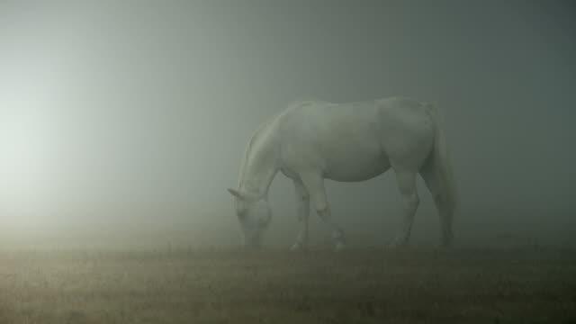 Caballos de niebla - vídeo