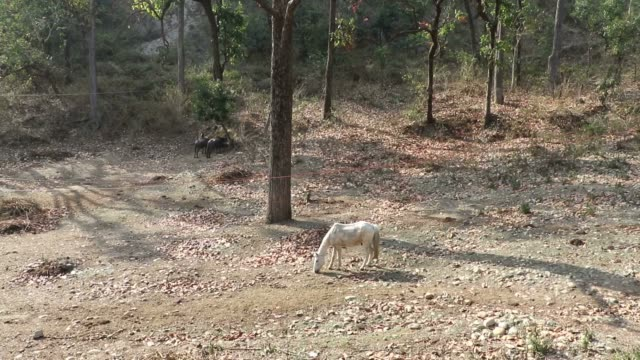 Horse in open forest. video