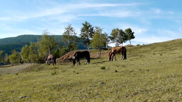 konie na pastwisko - grzywa filmów i materiałów b-roll