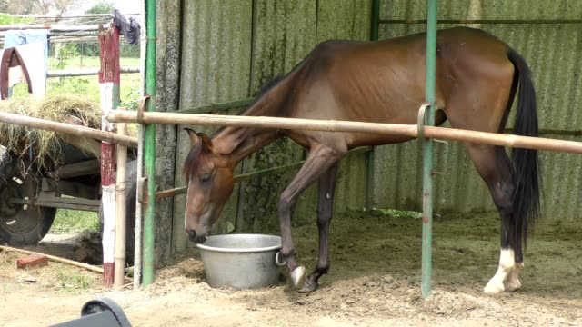 Horse in stable and eating the fodder