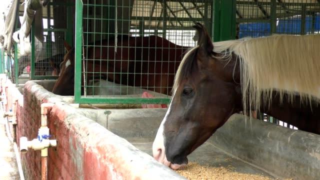cavallo in stalla che mangia il foraggio - stallone video stock e b–roll