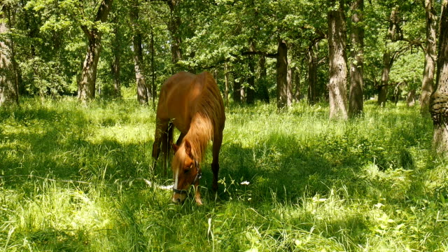 Pferd im Park. – Video