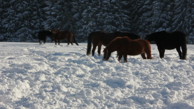Horse in the snow video