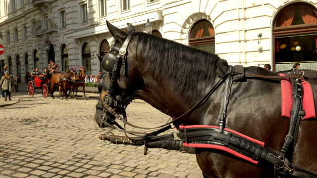 horse in vienna - cocchio video stock e b–roll