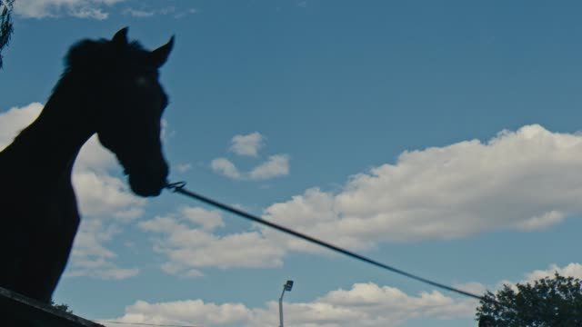 Horse jumping close up. Horse runs on the sand and jumps through a barrier video