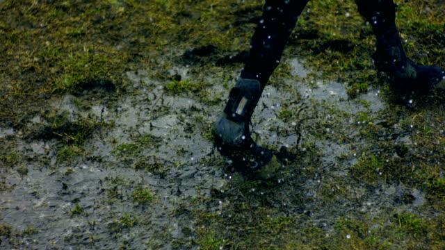 hästhoppning i regnet - hästhoppning bildbanksvideor och videomaterial från bakom kulisserna