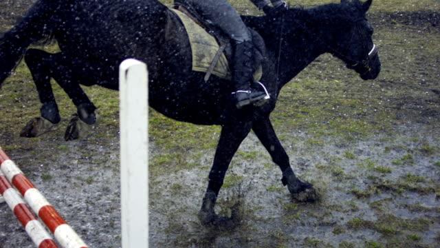cavallo saltando in il pioggia - attività equestre ricreativa video stock e b–roll