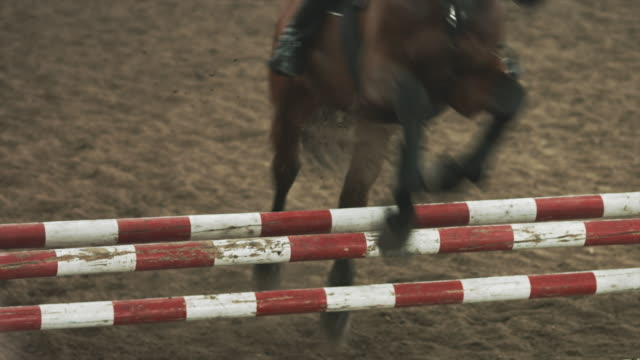 Horse jumping obstacles video