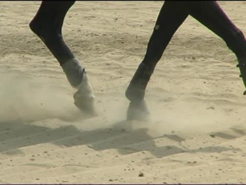 gambe di cavallo - arto inferiore animale video stock e b–roll