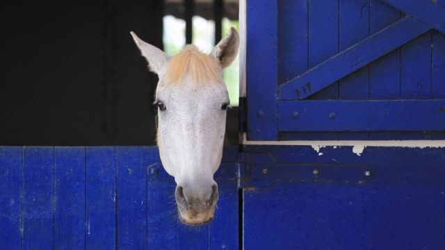Horse locked inside barn starring to camera video