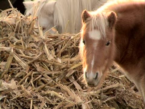 horse blick in die kamera - pferdeartige stock-videos und b-roll-filmmaterial