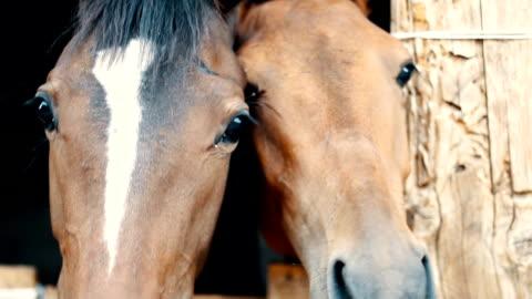 at aşk - memeli stok videoları ve detay görüntü çekimi