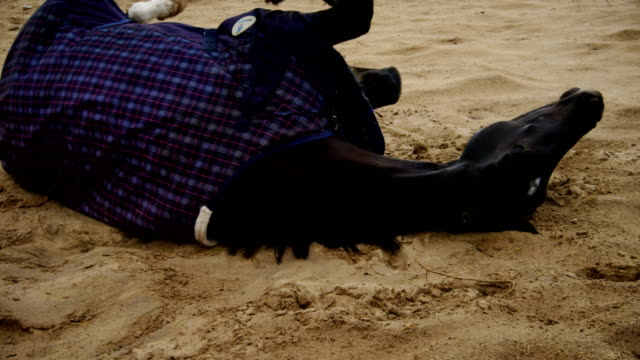 horse lying on ranch and getting up 4k - equino video stock e b–roll