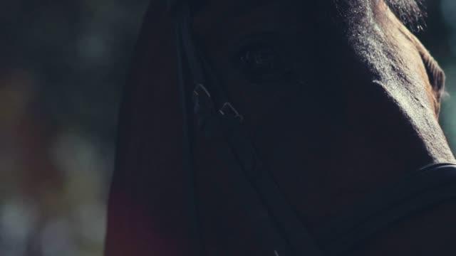 horse mane. woman's hand stroking the horse. muzzle of a horse - скаковая лошадь стоковые видео и кадры b-roll
