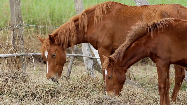 horse munches mouthful of green grass in a lush green field - grzywa filmów i materiałów b-roll