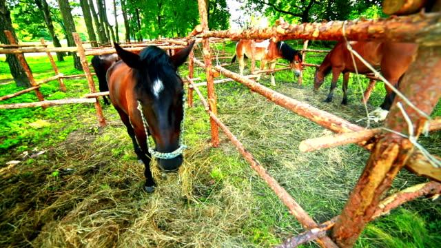 Horse nibbling grass video