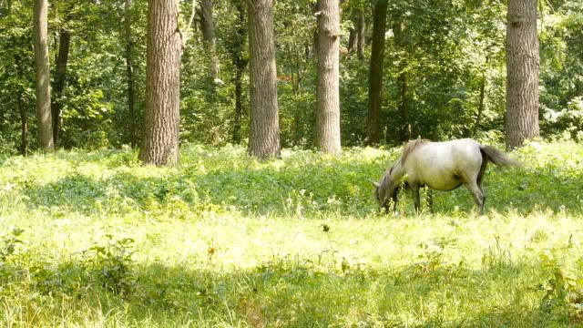 Pferd auf der Weide. – Video