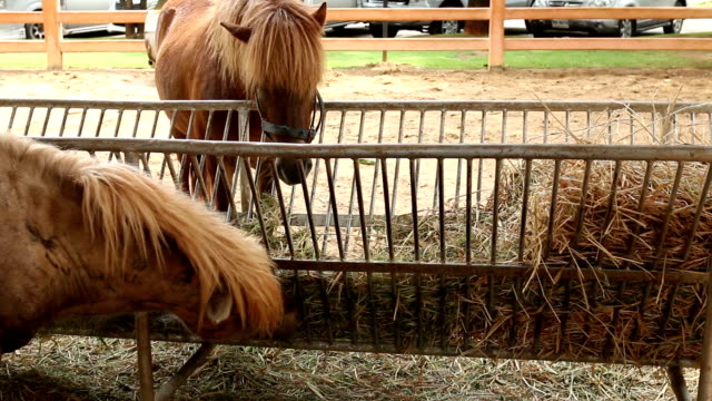 Horse on the field Horse on the field. eat straw in farm, school of horse ;High Definition 1920x1080 Format corral stock videos & royalty-free footage