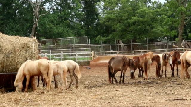 koń w polu - grzywa filmów i materiałów b-roll