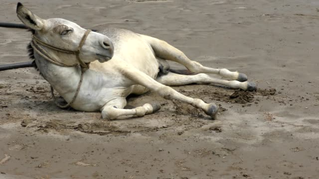Horse on the ground and in wet sands
