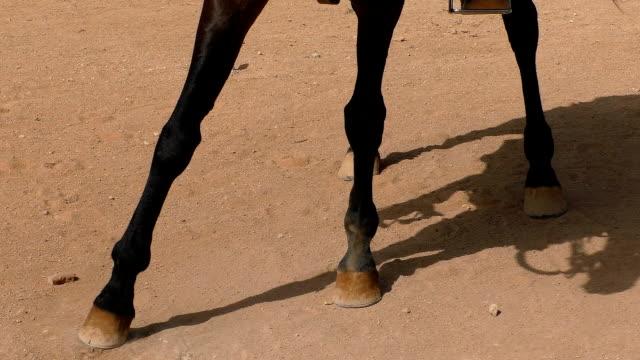 häst pawing marken - land bildbanksvideor och videomaterial från bakom kulisserna