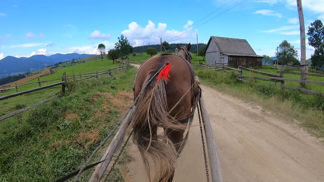 Horse pulls a chaise on a dirt path on a sunny day
