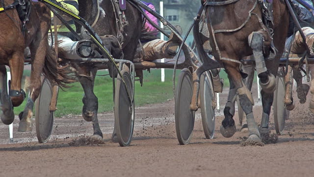 horse racing, french trotter, harness racing at racecourse, caen, normandy, france - cocchio video stock e b–roll
