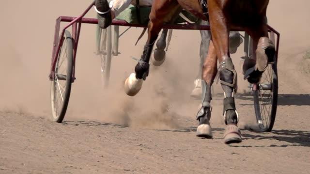 hästkapplöpning av vagnarna - häst tävling bildbanksvideor och videomaterial från bakom kulisserna