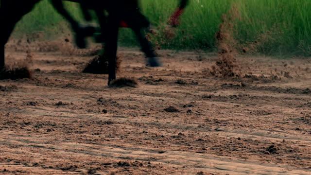 at yarış gerçek zamanlı - horse racing stok videoları ve detay görüntü çekimi