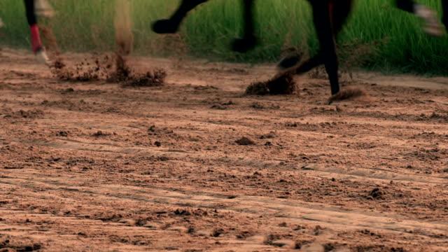 horse racing realtid - racehorse track bildbanksvideor och videomaterial från bakom kulisserna