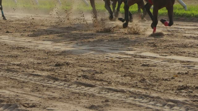 pferderennen slow motion - pferderennen stock-videos und b-roll-filmmaterial