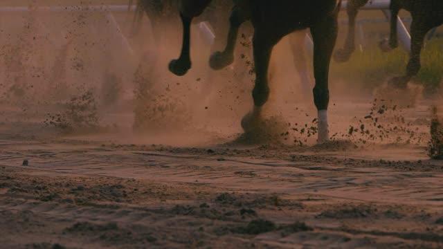 at yarışı - horse racing stok videoları ve detay görüntü çekimi