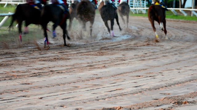 hd: pferderennen tempo. - pferderennen stock-videos und b-roll-filmmaterial