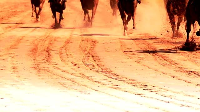 at yarışı. - horse racing stok videoları ve detay görüntü çekimi